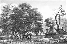 INDIAN TRIBE of the USA - GROVE of the COUNCIL - Engraving from 19th century