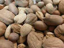 2.5 Pounds Mixed Nuts in Shell Pecans, Almonds, Hazelnuts & Walnuts (No Brazils)