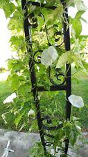 Japanese Morning Glory-HAMA NO YUKI-White Blooms-10 Seeds-Grown in my yard