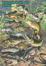 Ryby słodkowodne - dekoracyjny plakat A2 + plakat GRATIS + darmowa wysyłka!