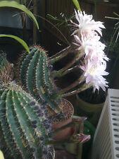 winterfeste Palmen 6 verschiedene sukkulente Arten für Ihren Garten Samen Deko