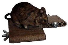 Degu Corner Shelf - pet toy, degu, rat, gerbil, hamster cage accessory.
