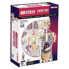TRANSPARENT TORSO HUMAN ANATOMY MODEL, 4D Kit # 26068 TEDCO TOYS