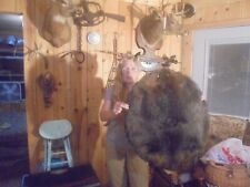 "51""# S Fancy Heavy Furred Dark Medium Adirondack Mt Beaver Pelt Fur Coyote/ Fox"