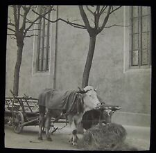 Glass Magic Lantern Slide BULLOCK CART BADEN DATED MARCH 1911 SWITZERLAND