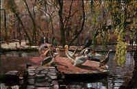 Rumänien BUKAREST Bucuresti Tierpark Zoo mit Pelikanen color Postkarte ungelauf.