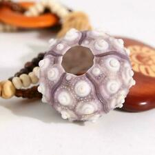 Natural Sea Urchin Sea Shells Conch Beach Wedding Decoration U8G0
