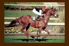 SUPER IMPOSE 1992 W S Cox Plate winner modern Digital Photo Postcard