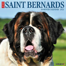 Just Saint Bernards (dog breed calendar) 2021 Wall Calendar (Free Shipping)