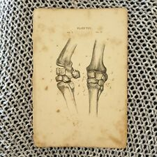 Horse Anatomy - Knee Joints - Antique Book Page - c.1870