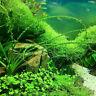 1000×Mixed-Fisch-Aquarium Grassamen Wasserpflanze-Samen Pflanze Grun Gut E5 D0J1