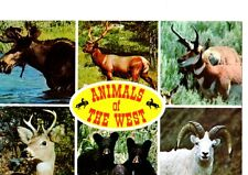 Animals of the West, 6 Views, 1975 Postmark- Postcard