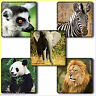Animal Stickers x 15 - Lion Zebra - Zoo Excursions Animal Party Birthday Favours