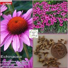 25 ORGANIC ECHINACEA(Echinacea purpurea) seeds, Medicinal Herb