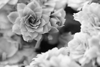 Black And White Flower - Floral Wall Art Decor Large Poster & Canvas Pictures
