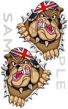 Medium Rip aprire STRAPPATA Bulldog Bandiera Union Jack Auto Adesivo Moto Furgone Camion Cassetta Degli Attrezzi