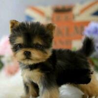 Yorkie Dog Simulation Toy Dog Puppy Lifelike Toy Stuffed V4G1