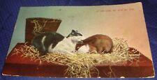 BG418 Vtg PostCard 1913 Cat And Rabbit If You Love Me Bite My Ear w/ Stamp