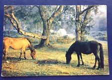 POSTCARD: PONIES IN THE NEW FOREST: HAMPSHIRE: USED: POSTED: POST DATE IS 1965