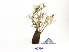 Aquarium Bonsai Driftwood Natural Decor Moss Tree Shrimp Fish -Size Mini- AC766