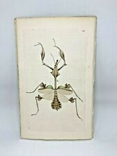 Long-breasted Mantis - 1783 RARE SHAW & NODDER Hand Colored Copper Engraving
