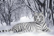 White Tiger Home Decor Canvas Print A4 Size (210 x 297mm)