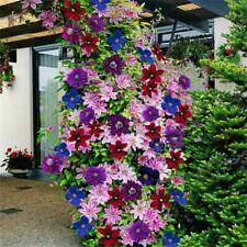 100pcs Clematis Climbing Plants Seeds 24 Colors Mixed Flower Home Garden Decor