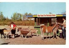 Lollypop Farm-People Feed Animals-Goats-Deer-Rochester-New York-Vintage Postcard