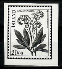 Photo Essay, Iceland Sc570 Flower, Myosotis scorpioides.