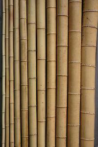 Bambusrohr  3-4 cm 2m Bambusrohre Bambusstange Bambusstangen Bambushalm Bambus