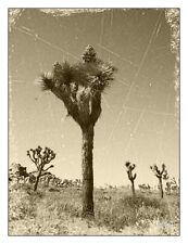 "Joshua Tree Sepia 12"" x 16"" Fine Art Print Vintage Style"