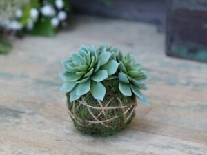 Artificial Realistic Green Faux Fleur Succulent with Moss Ball, Houseplant