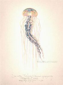 Ocean SEA NETTLE JELLYFISH Original SIGNED hand worked limited edition art print