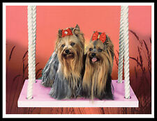 YORKSHIRE TERRIER TWO DOGS ON A SWING LOVELY DOG PRINT POSTER