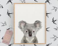 Baby Koala Safari Nursery Print,Animal Nursery Print,Safari Animal Art