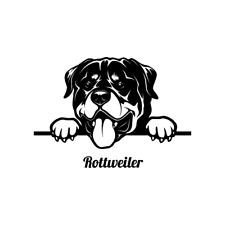 Peeking Rottweiler Dog Clipart Vector Clip Art Graphics Dxf Svg Eps Ai Png Pdf