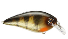 "Strike King KVD Square Bill 1.5 ""Yellow Perch"""