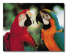 Tropical Birds Macaw Parrots Wall Picture Art Print
