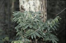 Huile essentielle de Katrafay pure et naturelle 500 ml