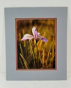 Art Picture Photograph WILD IRIS Signed by Wildlife Artist Joan Zygmunt Unframed