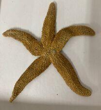 """Large Starfish Flatbottom Seastar 6"""" Marine Specimen Education Aid 50+ years old"""