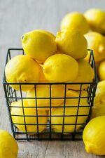 Organic Meyer Lemon Bonsai Tree -10 SEEDS-  Indoor Outdoor Garden Fruit  Citrus