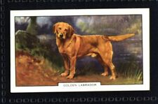 Gallaher Dogs 2nd Series 1938 - Golden Labrador No. 12