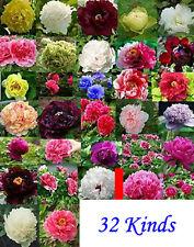 Mix 32 kinds China Peony Seed Paeonia suffruticosa Tree,1KG seeds