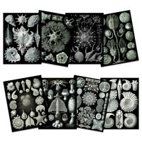 Ernst Haeckel Kunstformen Nature Black White Biology Wall Art Poster Pack of 8