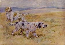 ENGLISH SETTER GUN DOG 1948 ART ADVERT PRINT - George Vernon Stokes Lotus Shoes