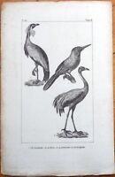 Le Jacamar, La Grue, La Demoiselle De Numidie - 1830s French Bird Print