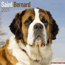 Saint Bernard Calendar 2021 Premium Dog Breed Calendars