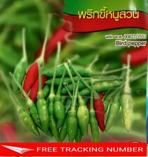 4x 120 Seeds Bird Pepper Chia Tai Quality Seed Home Garden Plant Thai Vegetable