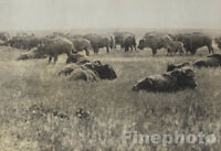 1900/72 EDWARD CURTIS Folio Native American Indian Bison Buffalo Photo Art 16X20